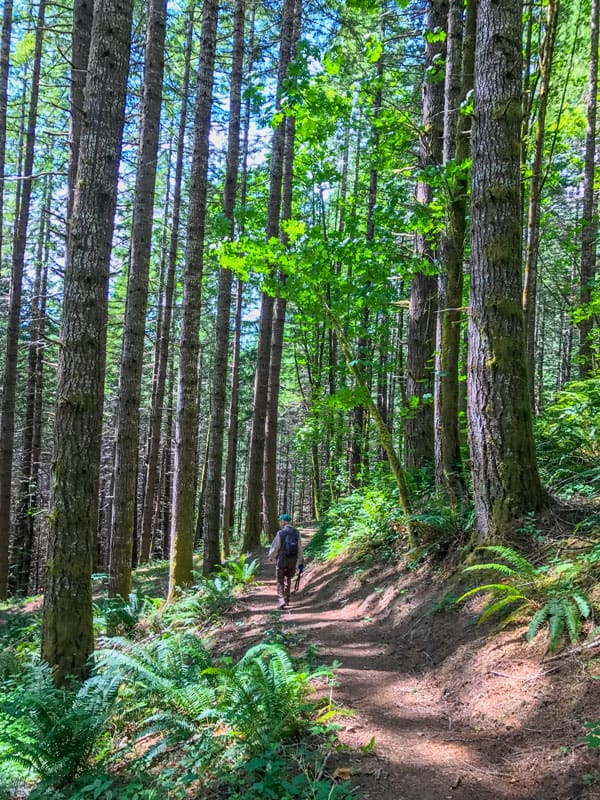 Hiker on trail under the trees.