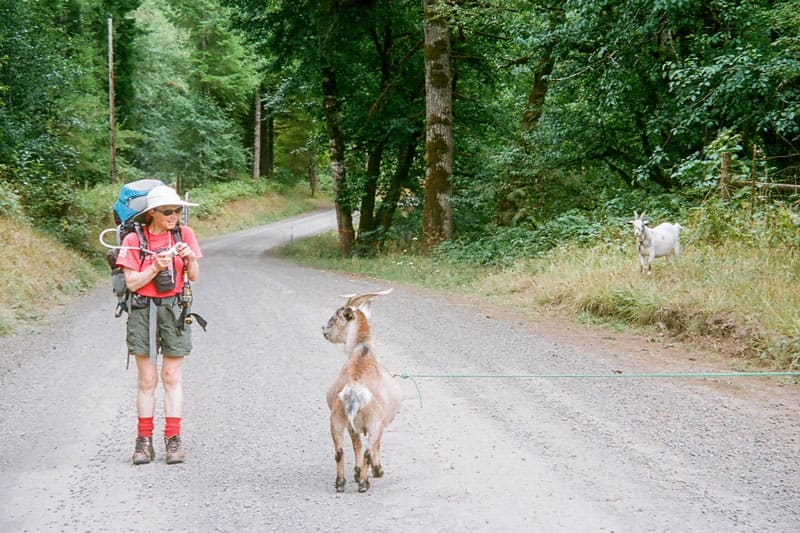 Hiker and goat.