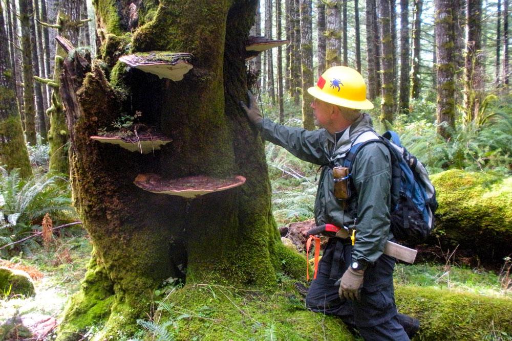 Volunteer inspecting a tree.